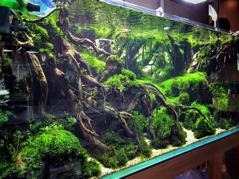 aquascape tank aquascaping fish tanks pinterest editor design and