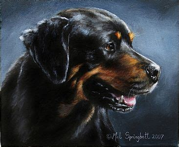 rottweiler pencil drawing artwork by melanie springbett or pastel paintings pencil drawings portraits