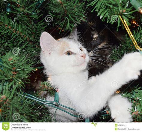 imagenes navidad gatitos gatitos en un 225 rbol de navidad foto de archivo imagen