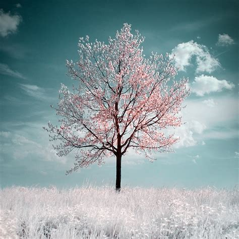 pretty trees 40 naturally beautiful photos of trees psdfan