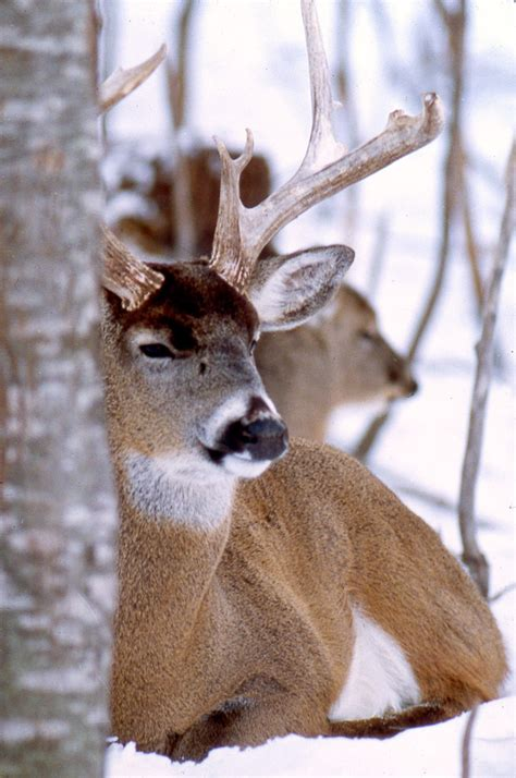 deer in bedroom deer bed 28 images back to the basics whitetail beds and bedding areas by dr the