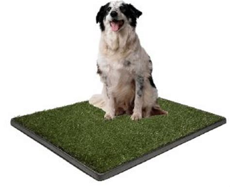 indoor puppy potty indoor potty for dogs thedogtrainingsecret the secret
