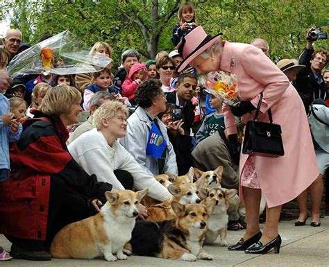 the queens corgis the queen s pet corgi has died