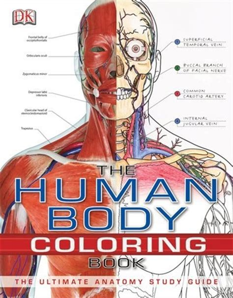 anatomy and physiology coloring book answers chapter 6 1000 images about human anatony on