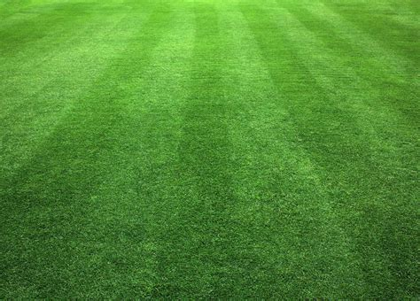 all about the mow clean cut lawn landscape