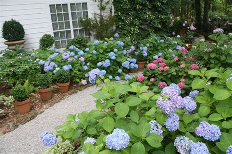 Landscape Pictures With Hydrangeas Landscaping Landscaping Ideas Using Hydrangeas