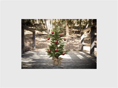 the day to take down your christmas tree krugersdorp news