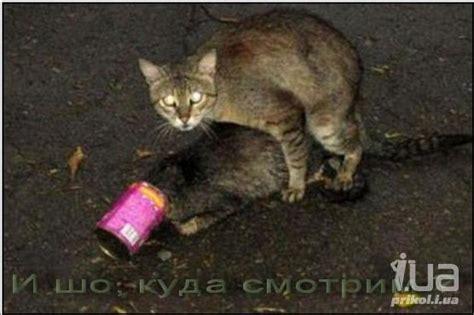 imagenes uñas gatos приколы картинки видео приколы смешные истории и анекдоты