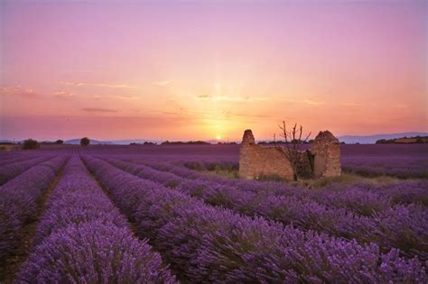 photographing  lavender fields  valensole france
