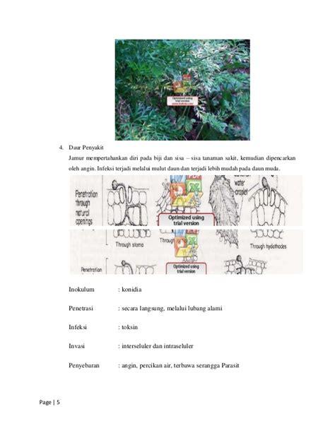 makalah laporan kel  hama  penyakit tanaman wortel