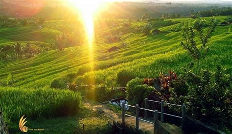 Lu Led Taman batukaru tour bali day tours visit jatiluwih rice terrace