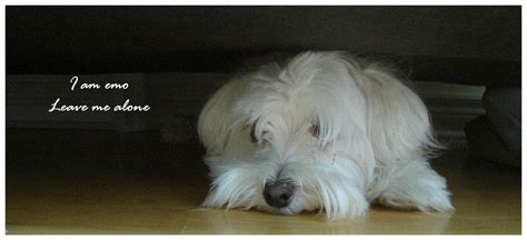 is my puppy depressed my depressed by jinyjin on deviantart