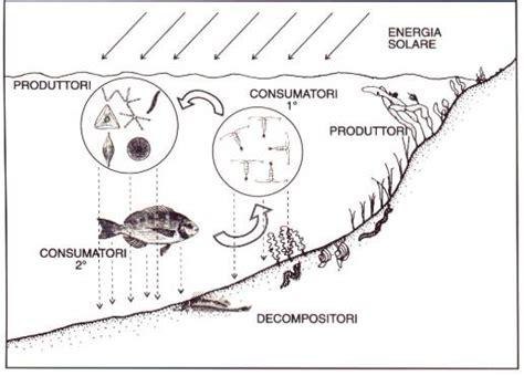 catena alimentare mare biologia marina