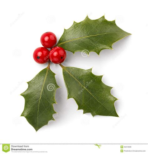 images of christmas holly leaves christmas holly stock image image of horizontal object