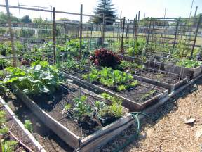 Backyard Vegetable Gardens » Home Design 2017