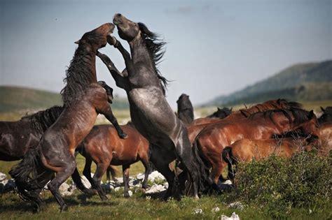 Imagenes De La Vida Salvaje   50 extraordinarias imagenes de la vida salvaje taringa