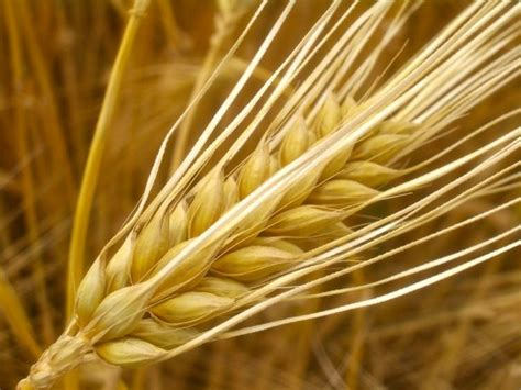is barley paleo the paleo diet food list