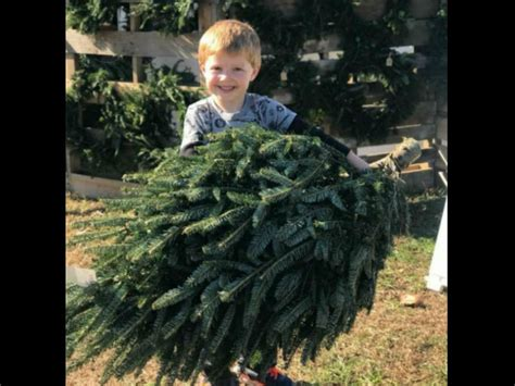 where to buy a live christmas tree williamson source
