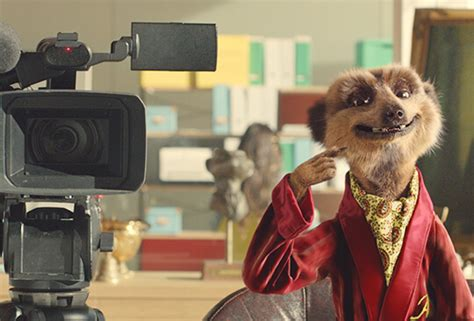 compare the meerkat house insurance compare the meerkat house insurance 28 images