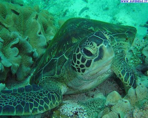 di mare immagini tartarughe di mare immagini in alta definizione