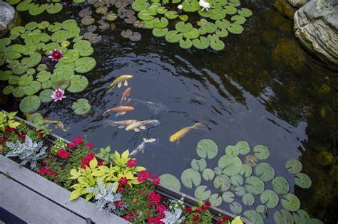 nc fish pond contracto builder water garden installer