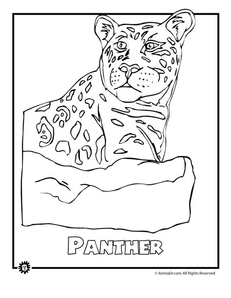 free rainforest coloring pages coloring home