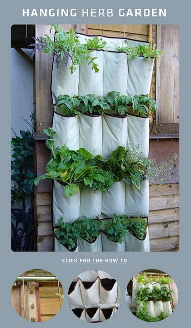 hanging herbs 10 best ideas about hanging herbs on kitchen