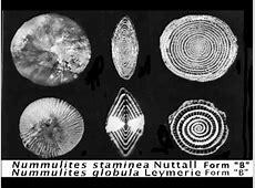 2A1.Foraminiferal Classification.mov - YouTube Foraminiferal