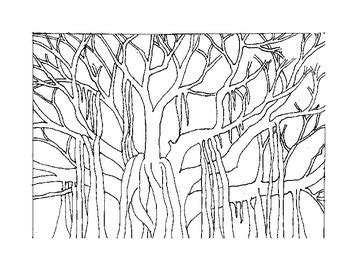 coloring pages of banyan tree banyan tree coloring page freebie by mariaan s creations tpt