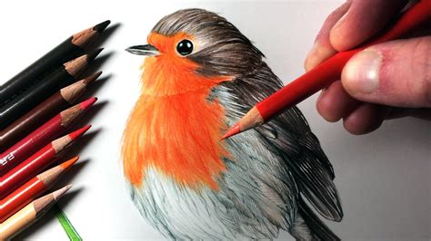 what color are robins how to draw a robin
