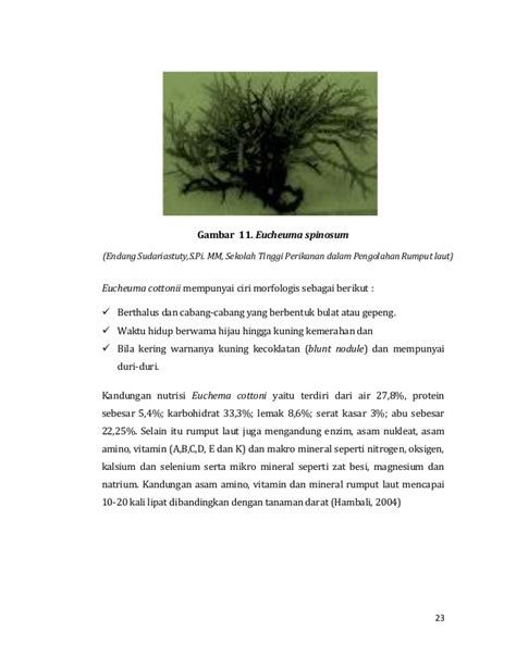 Rumput Laut Euchema Cottoni pengolahan hasil sing pro perikanan rumput laut