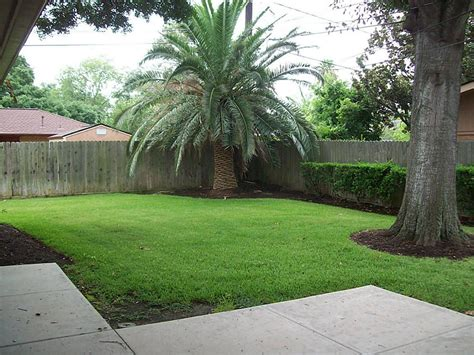 backyard palm trees backyard ideas with trees 28 images my garden my for