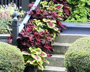 containerscaping take your potted plants to a new level garden housecalls