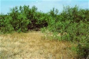 Purple Three Awn Tpwd Gis Vegetation Types Of Texas Brush
