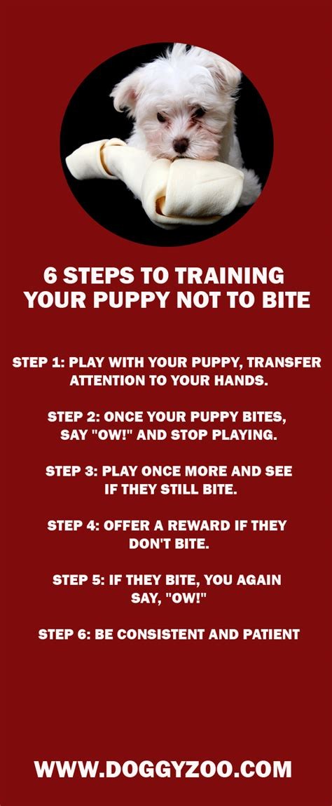 puppies not to bite 6 steps to your puppy not to bite doggyzoo comdoggyzoo
