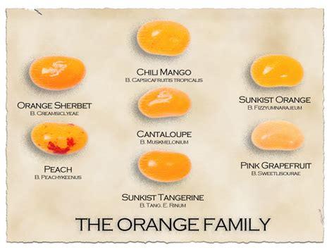 Jelly Whitening Ekstrak Orange Premium jelly belly tropical mix flavor guide