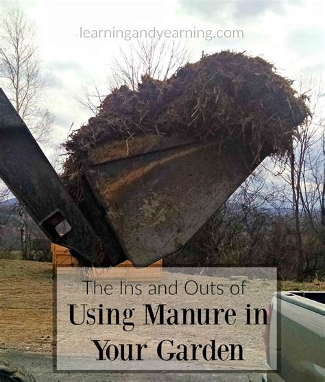 is manure for vegetable gardens 100 is manure for vegetable gardens the