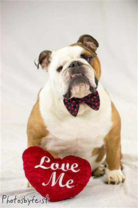 valentines day bulldog a bulldog pets original works