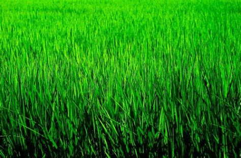 organic colours incorporate the green shades of grass 30 colorful works of monochromatic photography urbanist