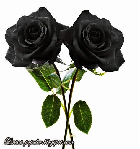 gambar bunga mawar bergerak gambar
