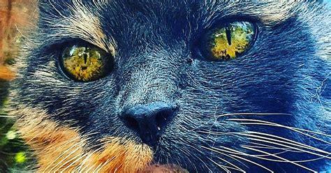 imagenes sorprendentes e increibles 30 incre 237 bles gatos tan fascinantes que te dar 225 n envidia