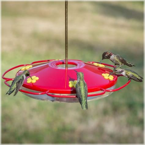 1000 images about hummingbirds 101 on pinterest