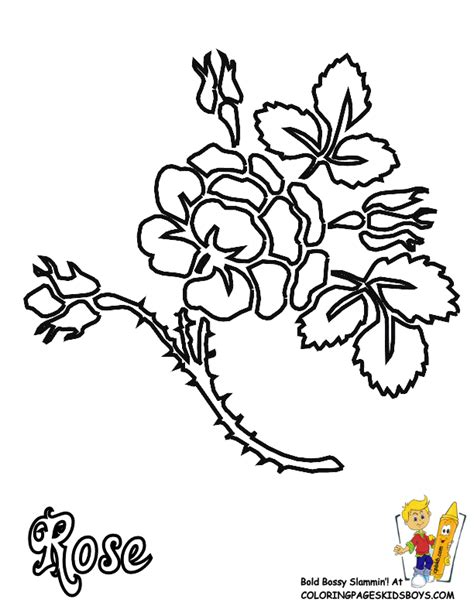 yellow rose coloring page tweet white calla lily pink white calla lily yellow calla