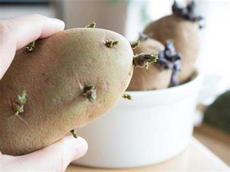 backyard potatoes how to grow potatoes in a container diy network blog