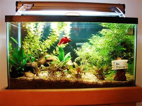 Decorations For A Fish Tank by Realistic Fish Tank Decoration Ideas Tedxumkc Decoration