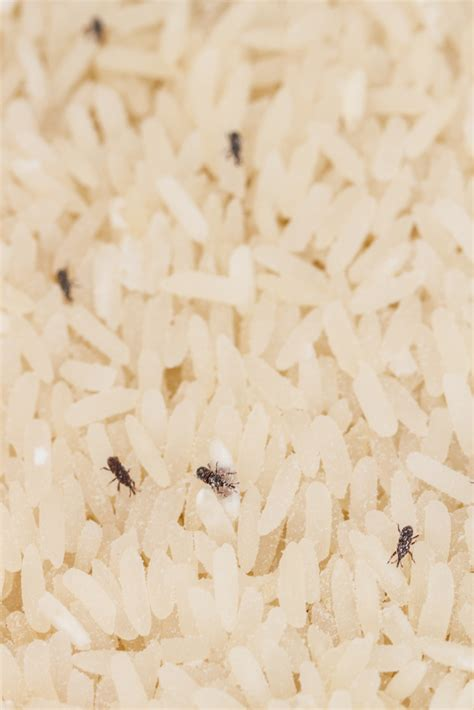 Weevils In The Pantry by How To Deal With Pantry Pests Tomlinson Bomberger