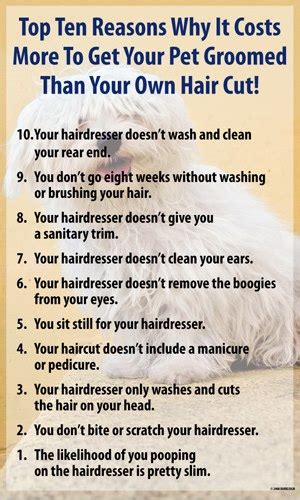 5 reasons why you should cut your own hair mens style guide top ten reasons why it costs more to get your pet groomed