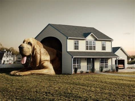 clifford dog house clifford the big red dog in real life basset hound awesomeness pinterest