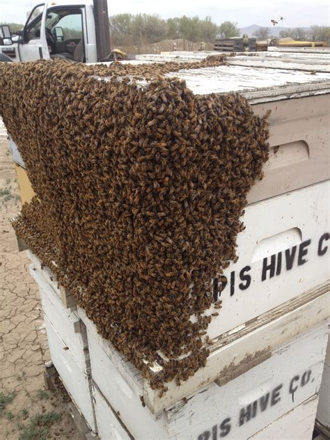 package honey bees for sale and spring 5 frame nucs for 2014 apis hive company everything