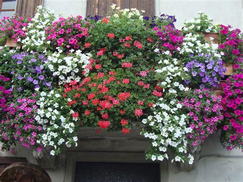 foto di giardini fioriti un piccolo giardino in citt 224 balconi fioriti